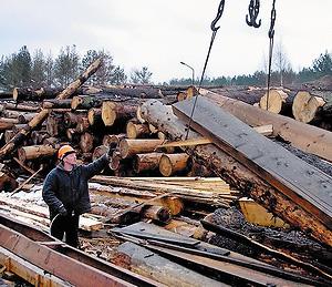 Эти бревна еще недавно были частью Беловежской пущи