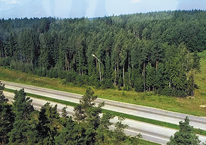 Эх, по такой бы автостраде – да на лесосеку!