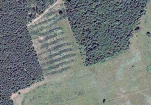 Беловежская пуща из космоса: ровные посадки вместо вековых лесов
