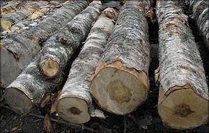 Человеку, претендующему на звание профессионала, должно быть очевидно, что это низкосортная древесина, а не фанерный кряж