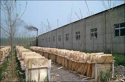 Сушка. Типичная китайская фанерная компания  покупает высушенные листы шпона у небольших производителей, вместо того чтобы производить шпон самой