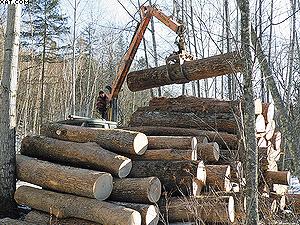 Этот лес пойдет на экспорт