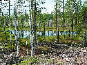 Ключевой биотоп – древостой вокруг небольшого озера