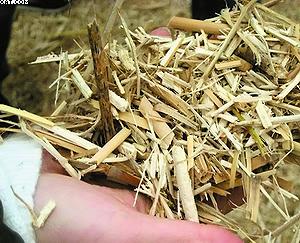 Рис. 7. Биомасса мискантуса после уборки и измельчения