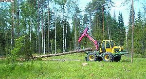 Лесной трактор LKT-82 на трелевке хлыстов