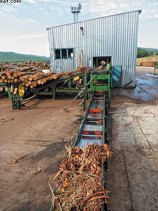 Окорка лиственницы на заводе по производству шпона