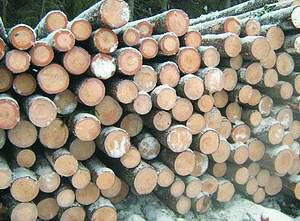 Заготовленная древесина