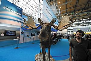 Лось на стенде Sandvik на выставке Ligna 2013
