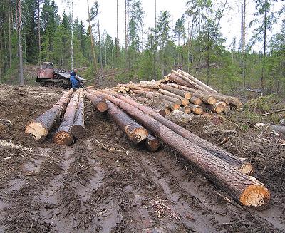 Рис. 4. Загрязнение круглых лесоматериалов при трелевке трактором с тросочокерным оборудованием